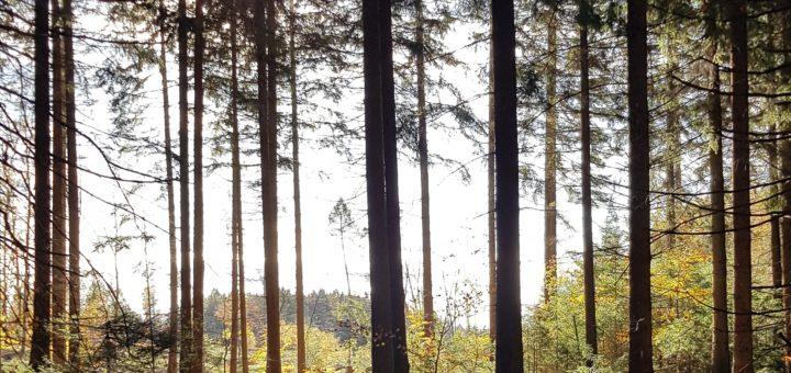 Papier Waldschutz